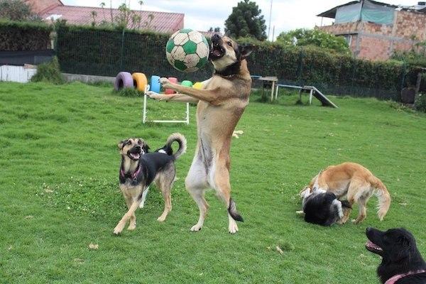 Residencias Caninas en Portugalete