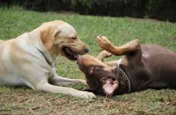 Residencias Caninas en Jaramillo de la Fuente 16