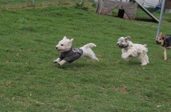 Residencias Caninas en Manzanares 14