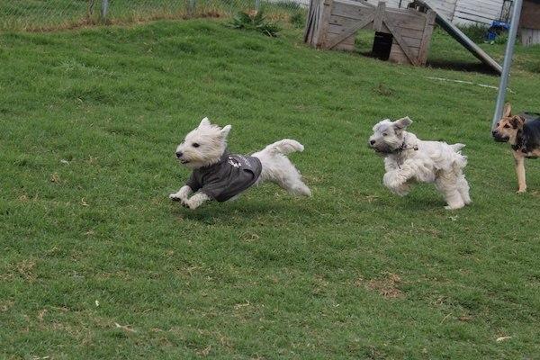 Residencias Caninas en Manzanares