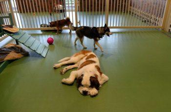 Residencias Caninas en Valleruela de Pedraza 19