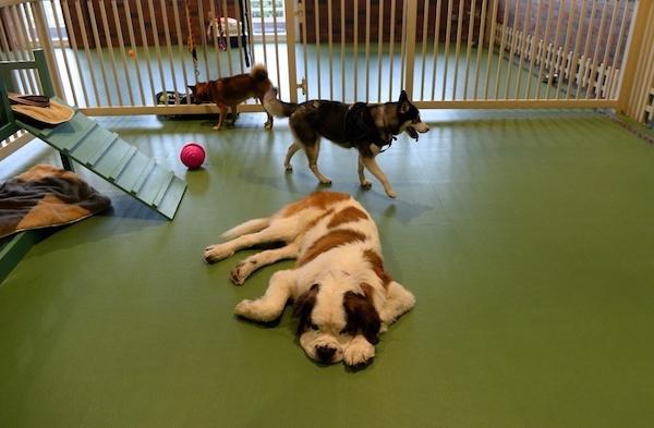 Residencias Caninas en La Frontera