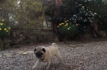 Residencias Caninas en Mungia 17