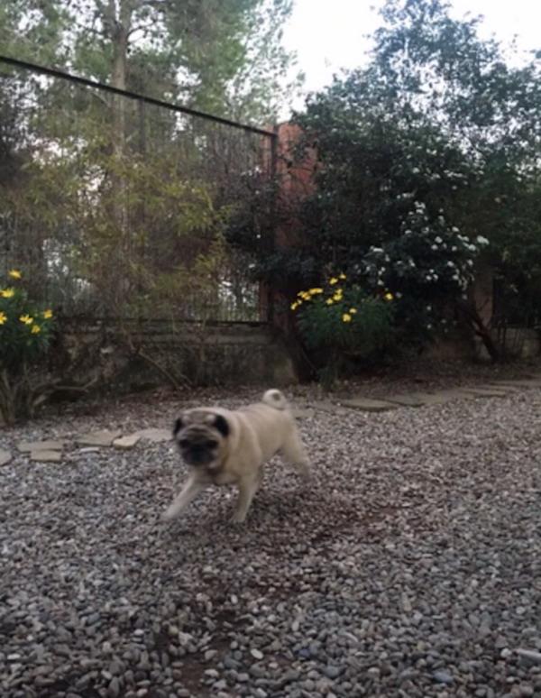 Residencias Caninas en Fuente de Santa Cruz
