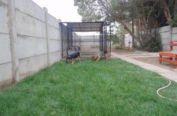 Residencias Caninas en Busturia 15
