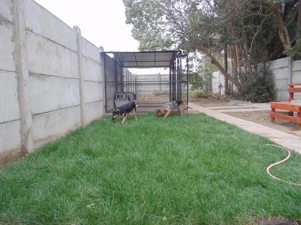 Residencias Caninas en Aguilar del Alfambra
