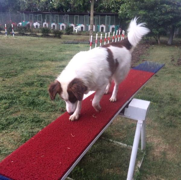 Residencias Caninas en Albaladejo del Cuende