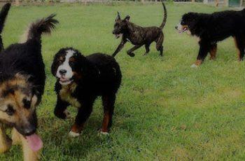 Residencias Caninas en Valencia del Ventoso 7