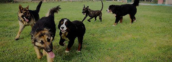 Residencias Caninas en Palazuelos de Muno