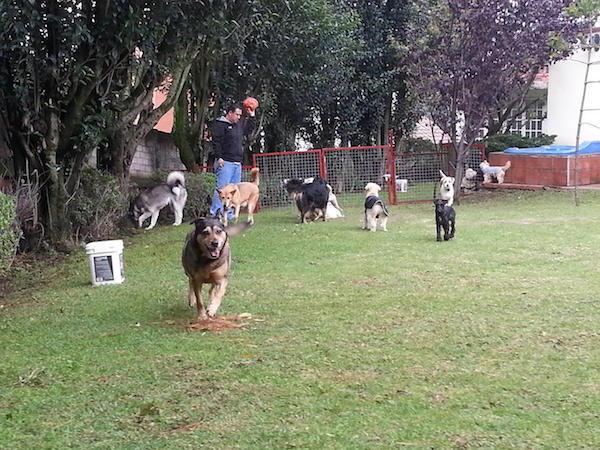 Residencias Caninas en Piedras Albas