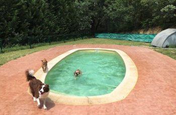 Residencias Caninas en Corral de Almaguer 15
