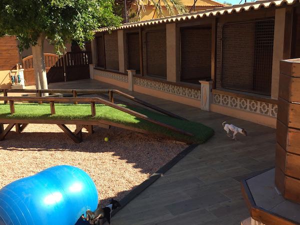 Las Mejores Residencias Caninas en Pozorrubio