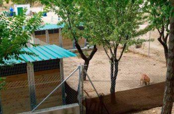 Residencias Caninas en Puebla de Alcocer 19