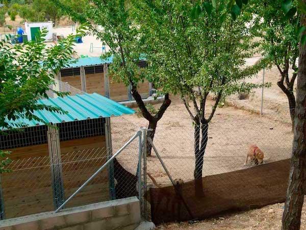 Residencias Caninas en Torrecilla del Rebollar