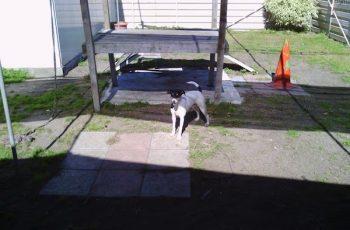 Residencias Caninas en Ane 15
