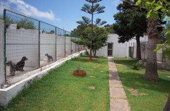 Residencias Caninas en Jabaloyas 8