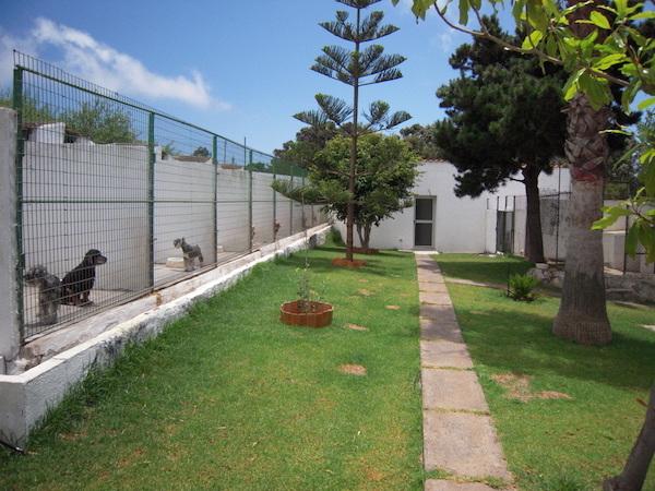 Las Mejores Residencias Caninas en El Pobo