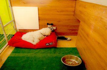 Residencias Caninas en Pantoja 15