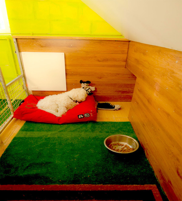 Las Mejores Residencias Caninas en Pantoja