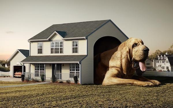 Las Mejores Residencias Caninas en Gumiel de Mercado