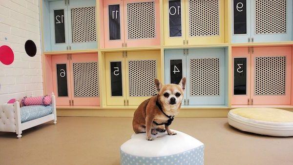 Las Mejores Residencias Caninas en Arratzu