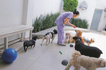Residencias Caninas en Used 16