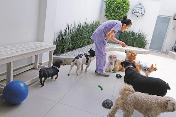Residencias Caninas en Seira