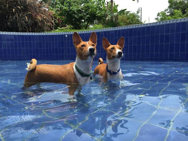 Residencias Caninas en Olvena