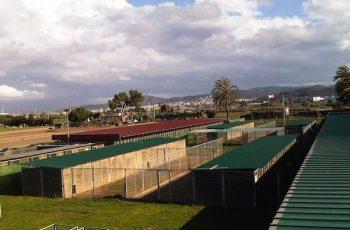 Residencias Caninas en Ballesteros de Calatrava 18