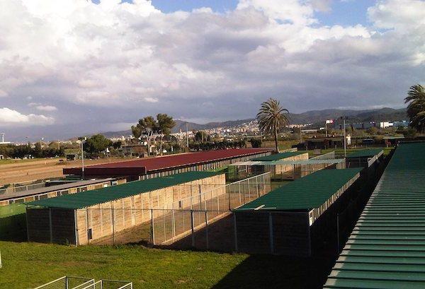 Residencias Caninas en Torregalindo