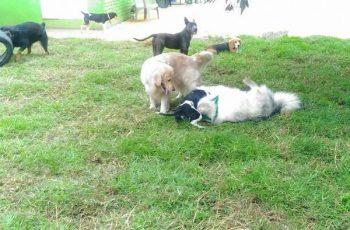 Residencias Caninas en Ripollet 19