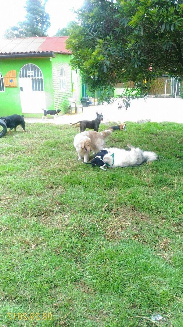 Residencias Caninas en A Illa de Arousa