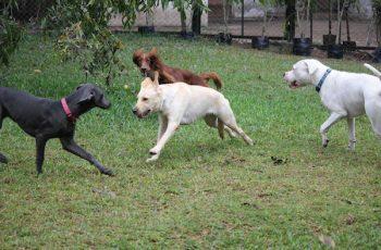Residencias Caninas en Tamarite de Litera 14