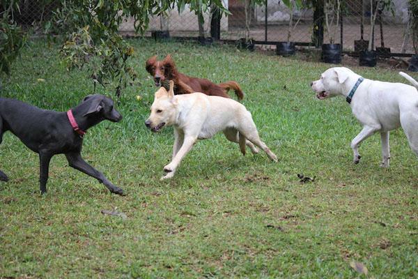 Las Mejores Residencias Caninas en Villarino de los Aires