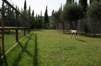 Residencias Caninas en La Pueblanueva 15