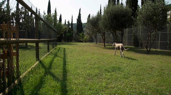 Residencias Caninas en Aragues del Puerto