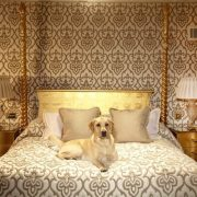 fotos-hotelesperros-lujo-35
